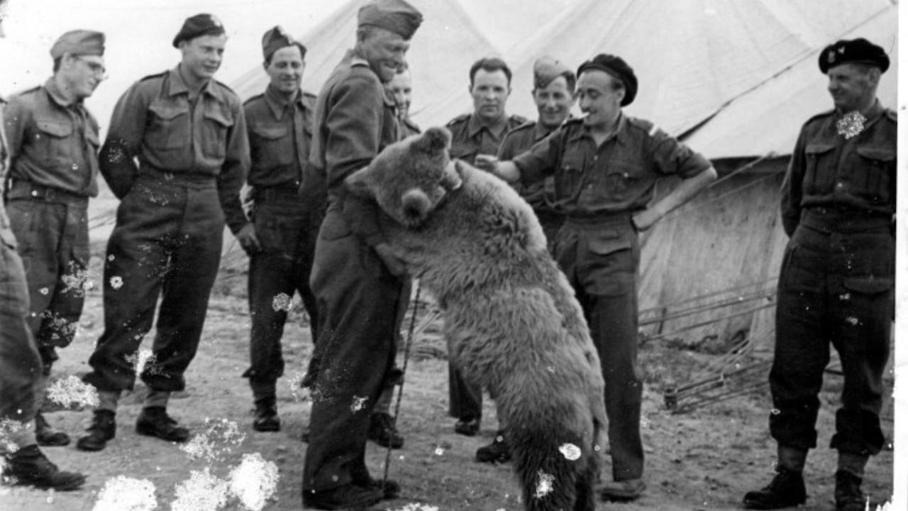 oso soldado