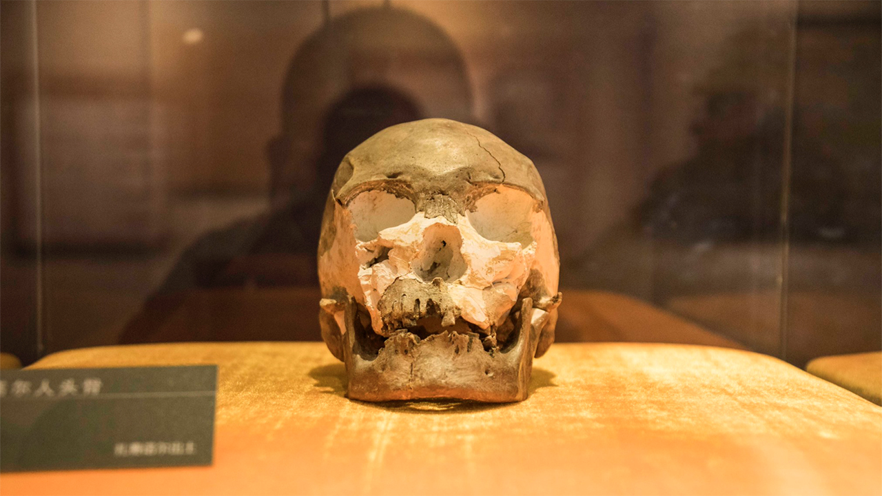 Jalainur cráneo