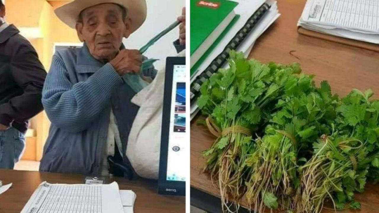 abuelito cilantro
