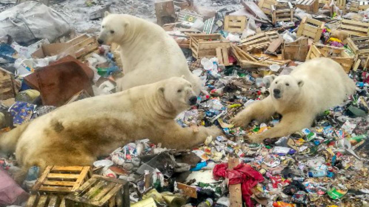 animales cambio climatico