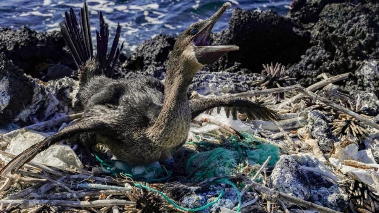 Islas Galápagos - plástico