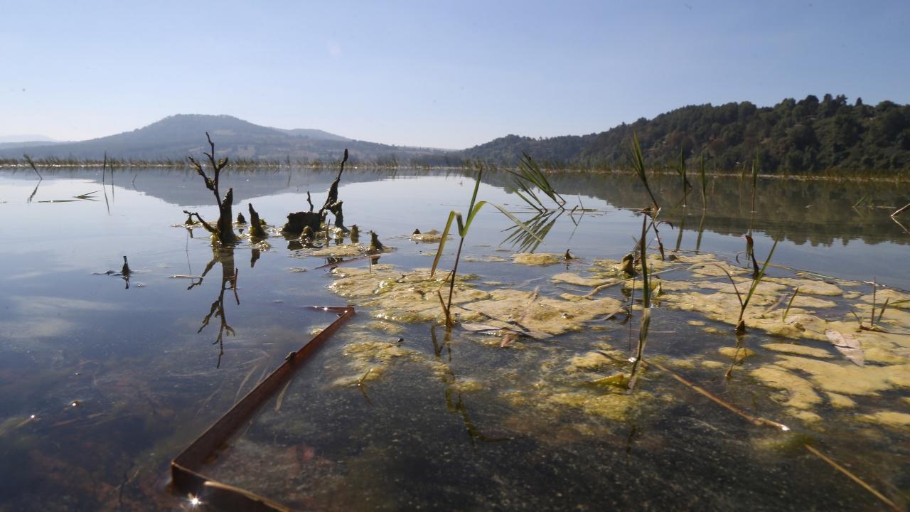 ahogados Querétaro