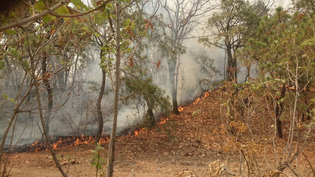 Incendio Jalisco