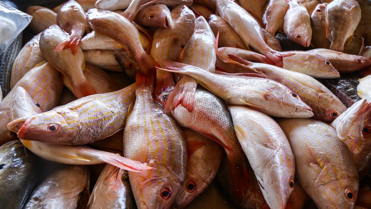 Profeco pescado