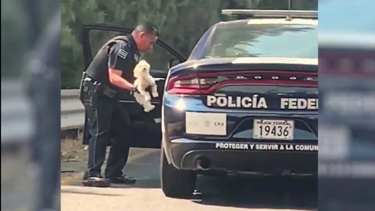 policía rescata a perrito