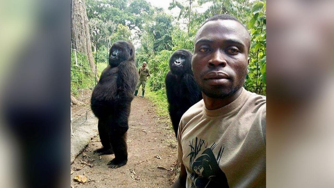selfie de gorillas