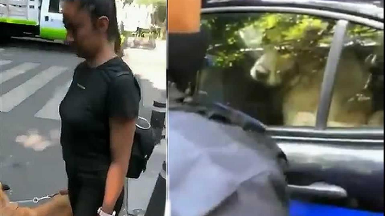 Dos perros fueron detenidos por jugar en una fuente