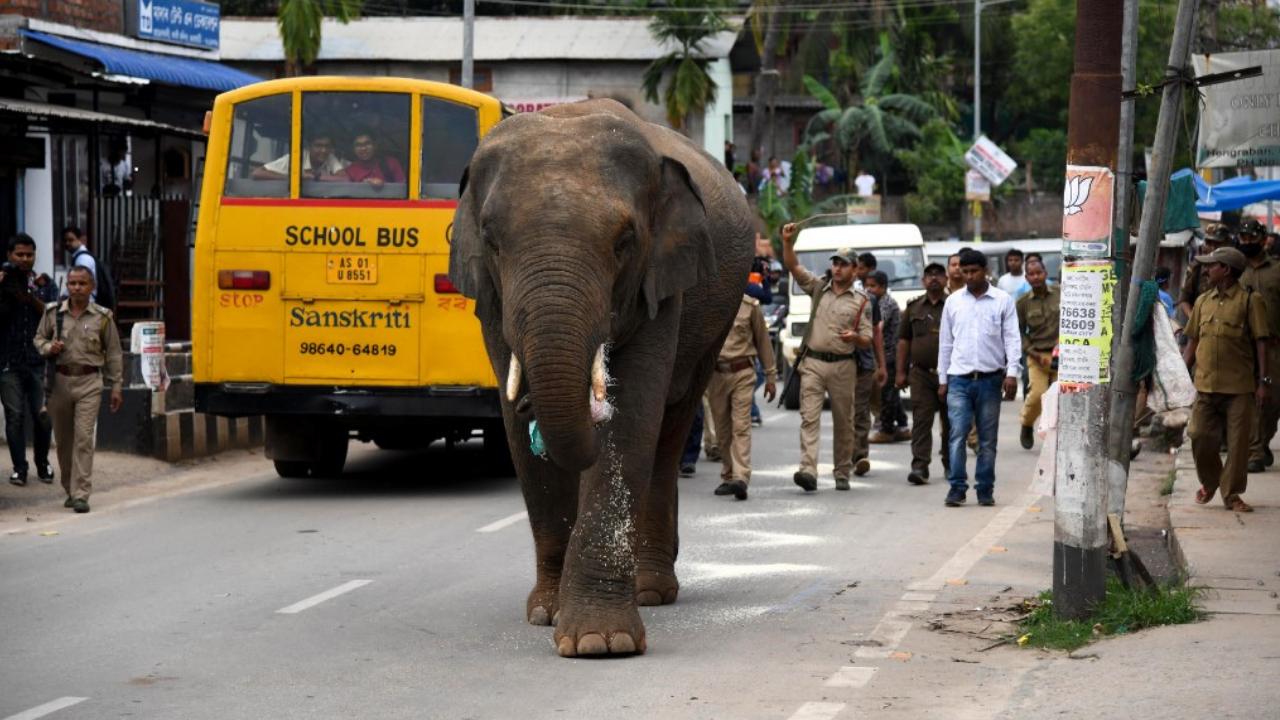 elefante India