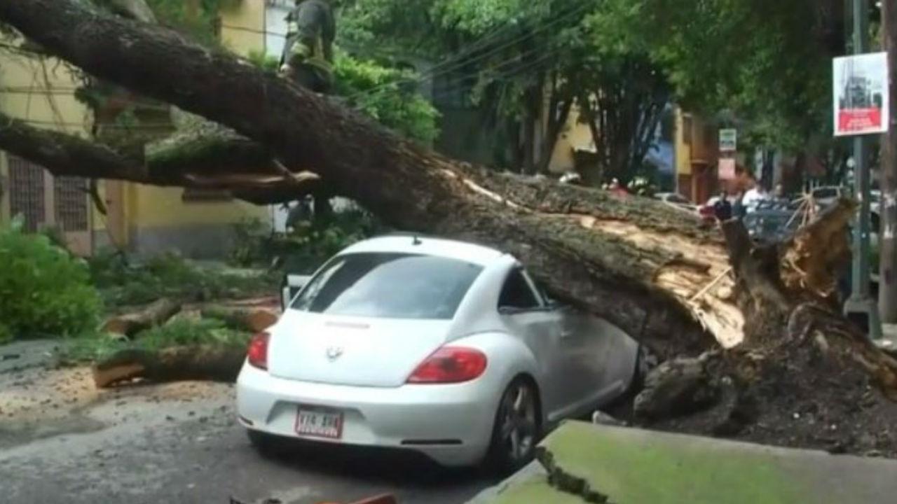 cae árbol condesa