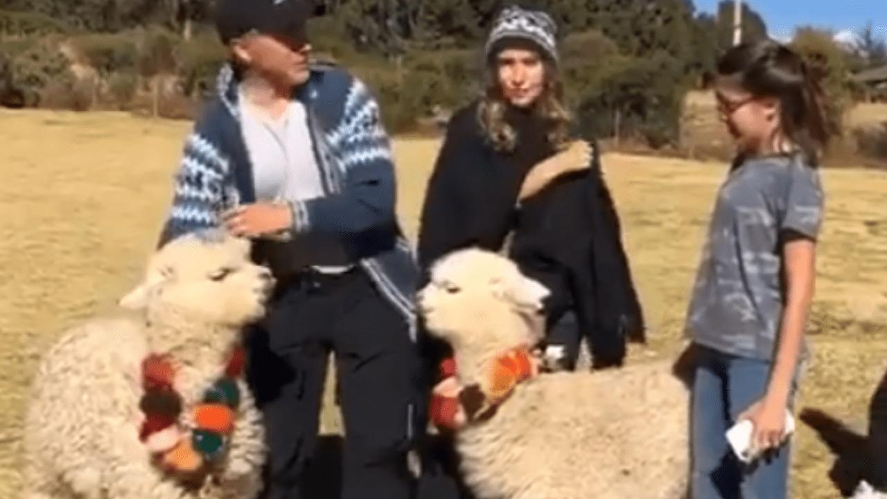 Sergio Mayer alpaca Perú