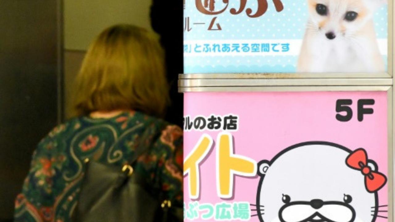 Letreros de cafés donde hay animales como atracción, en el distrito Harajuku en Tokio, el 21 de agosto de 2019