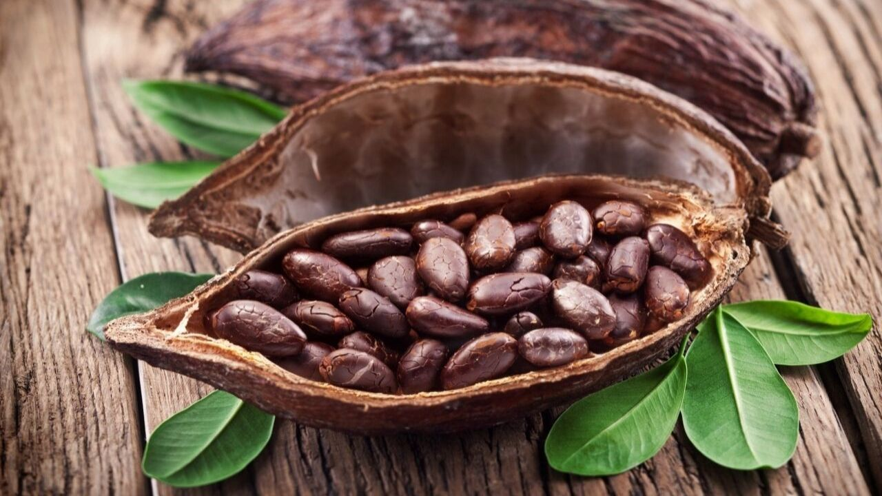 cacao mexicano