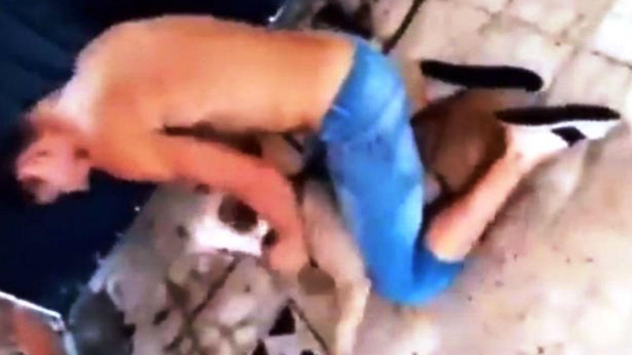 golpeado pitbull