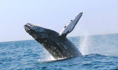santuario ballenas petróleo