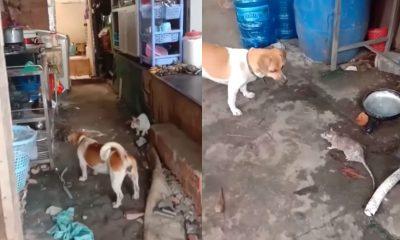 video perro gato