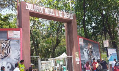 zoológico Veracruz
