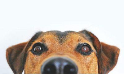 perros criollos