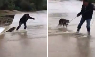 perrito río