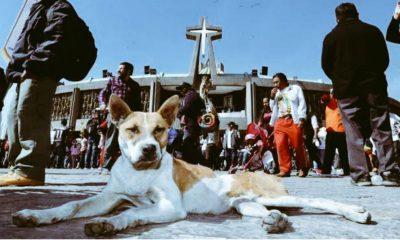 perros basílica