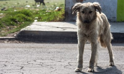 perros callejeros altamira