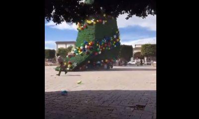 árbol ixmiquilpan