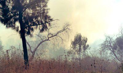 incendio pastizal gustavo a madero