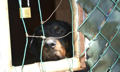 fiscalía maltrato animal