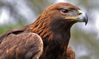 Día Nacional Águila Real