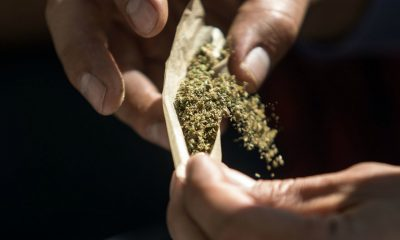 Corte marihuana