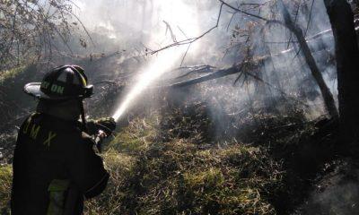 bosque chapultepec incendió