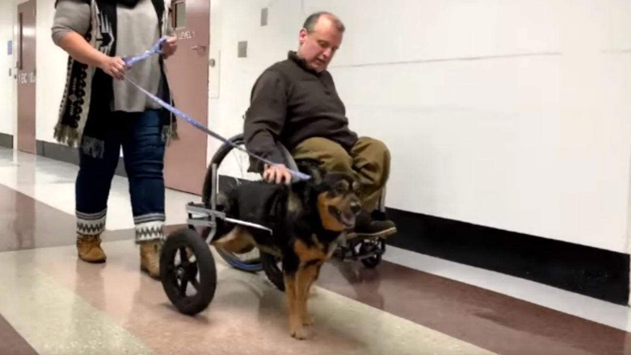 adoptó perrito descapacidad
