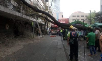 árbol Buenavista