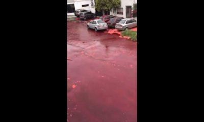 alberca sangre argentina