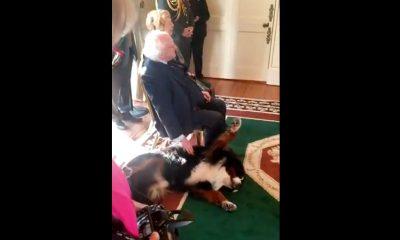 perrito presidente irlanda