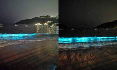bioluminiscencia Acapulco