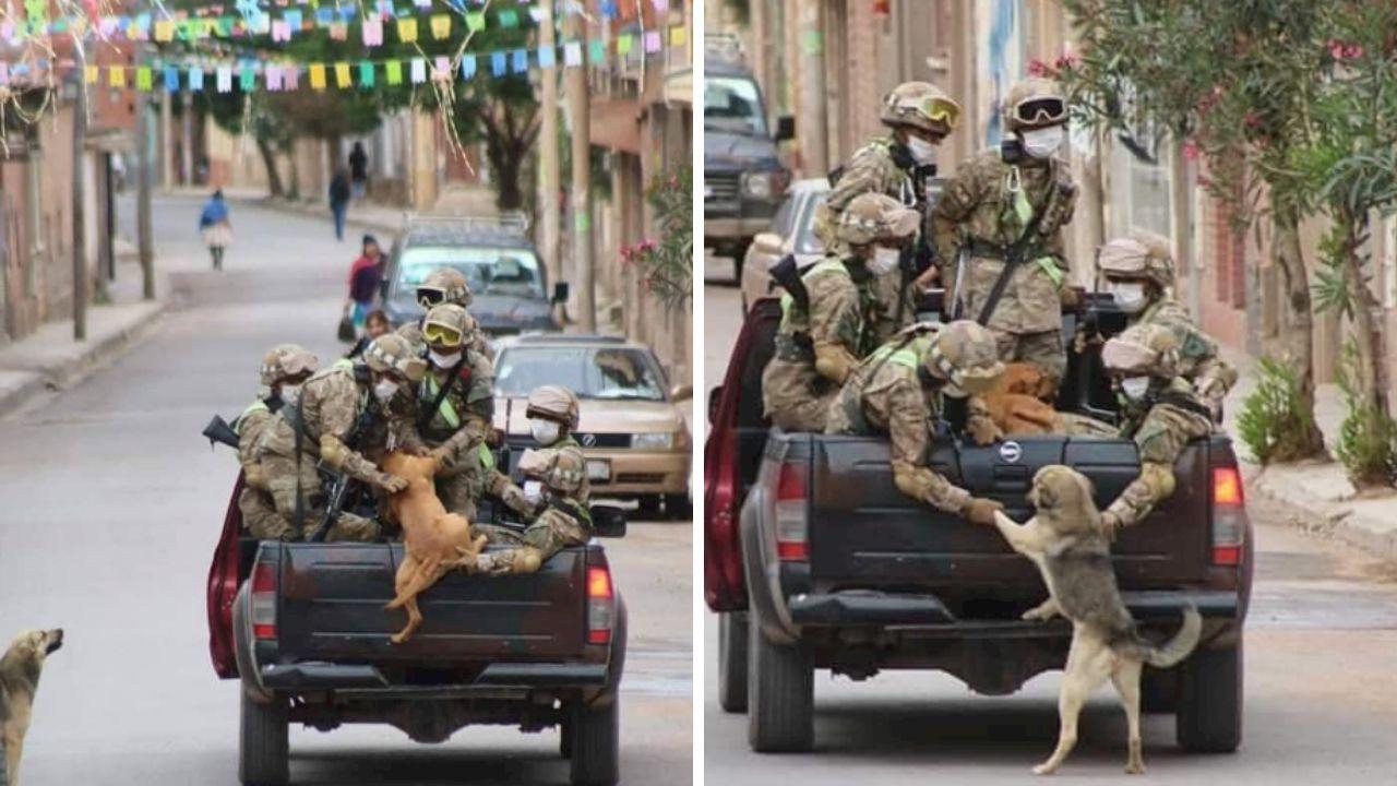 Bolivia perritos