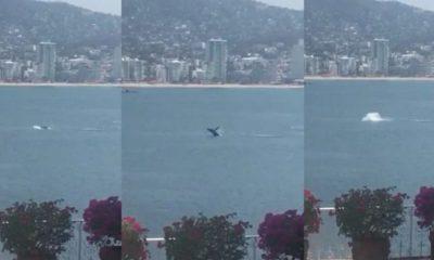 ballena acapulco
