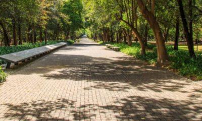 Bosque Chapultepec