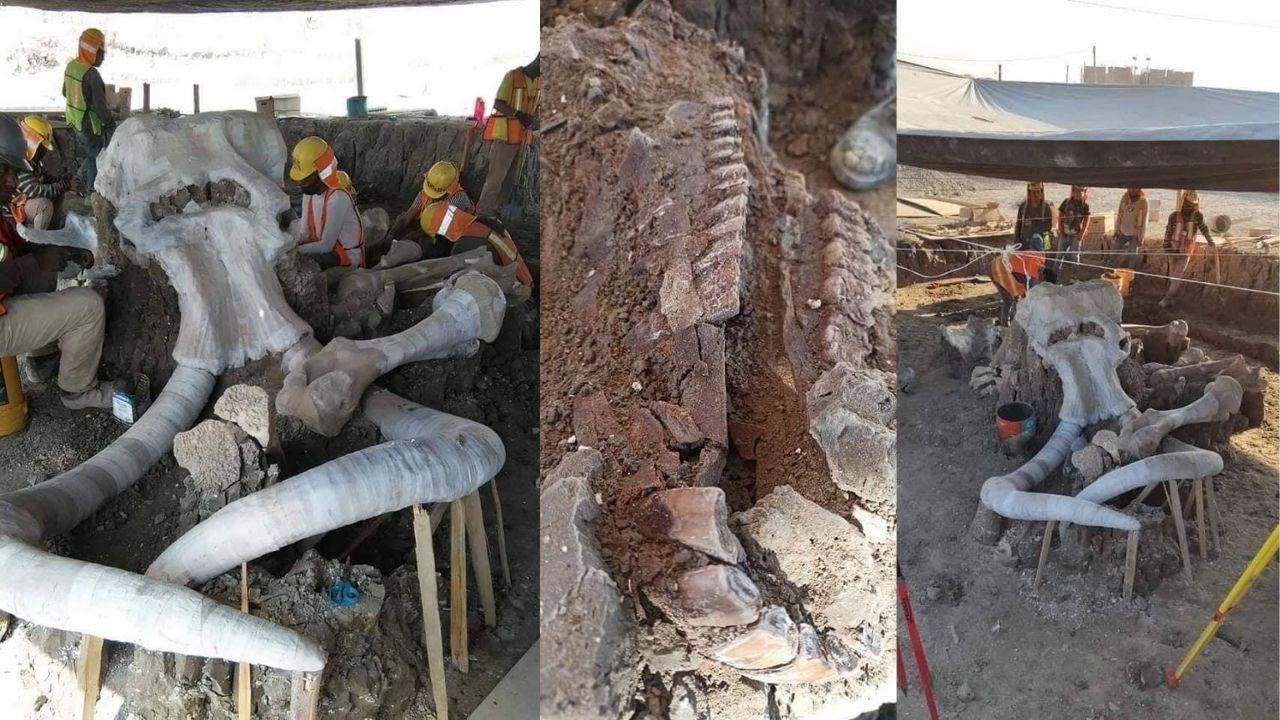 Encuentran restos de más de 60 mamuts en Santa Lucía — Noticias en ...