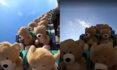 osos de peluche montaña rusa