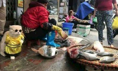 gatito vende pescado
