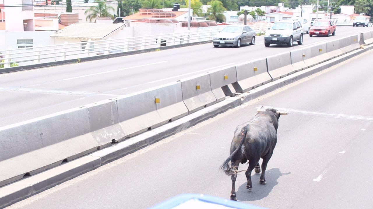 Toro Querétaro