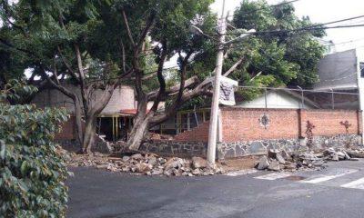 árbol Coyoacán