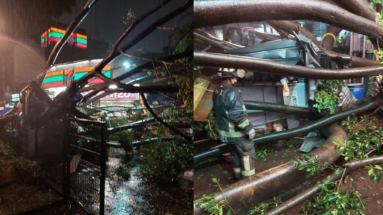 árbol lluvias cdmx