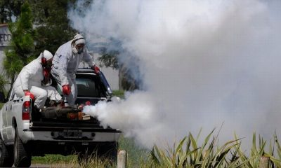 Chiapas dengue intoxicadas