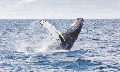 ballena Australia