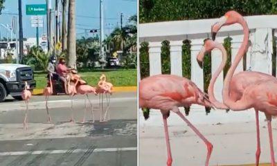 flamingos Yucatán